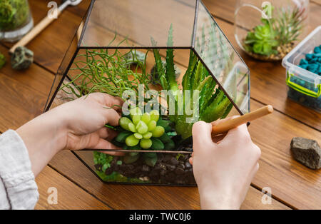 Woman transplanting succulent plants in glass florarium with various tools on table. Home gardening concept - Stock Photo