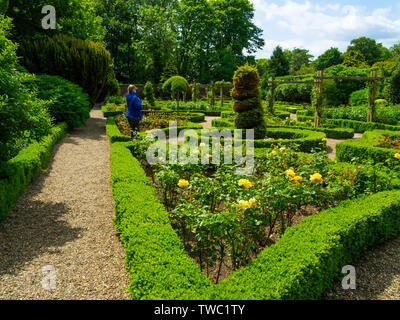 A woman admiring the Walled Rose Garden at Sewerby Hall Bridlington East Yorkshire - Stock Photo