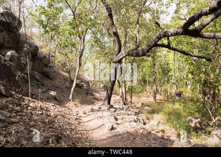 Rocky trail with forest growth by Robin Falls in the Northern Territory of Australia - Stock Photo