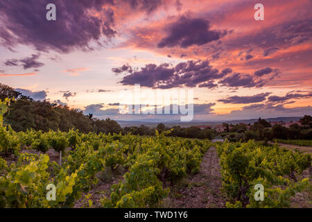 Colorful evening over vineyard in Gigondas, Provence, France - Stock Photo