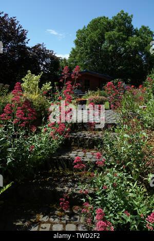 Rote Spornblume (Centranthus ruber) an einer Basaltstein-Treppe - Stock Photo