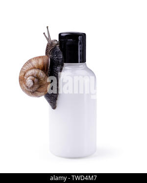 Skin care cosmetics with Snail mucus. One black snail climbing on a cosmetic cream or lotion bottle against white background. - Stock Photo