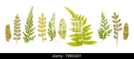 Set of dry small cute pressed leaves of various shapes of different flower and trees isolated on white - Stock Photo