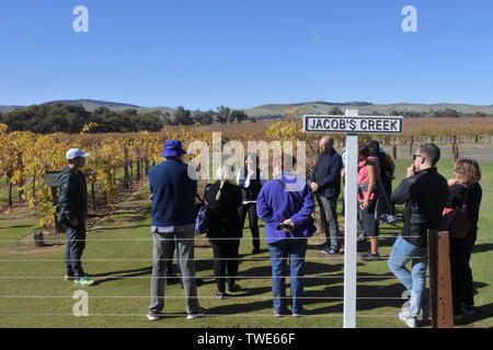 ADELAIDE - MAY 14 2019:Wine tour in a Vineyard in Barossa Valley. Barossa Valley is a renowned wine-producing region northeast of Adelaide in South Au - Stock Photo
