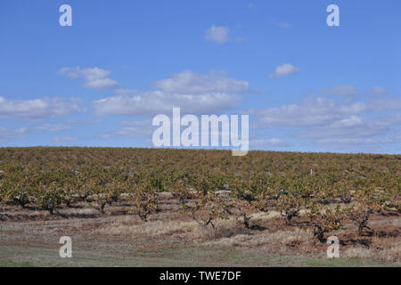 Landscape view of vineyard in Barossa Valley. Barossa Valley is a renowned wine-producing region northeast of Adelaide in South Australia - Stock Photo