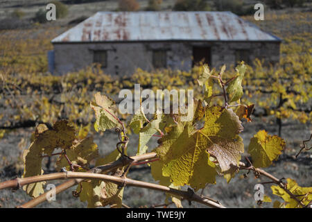 An old vineyard in Clare valley. Clare Valley is a renowned wine-producing region northeast of Adelaide in South Australia. - Stock Photo