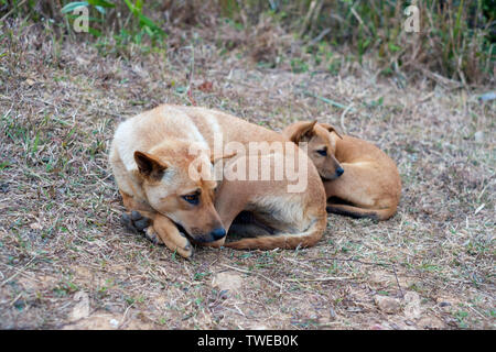 Stray dog and puppy sleeping lazy on rural hill - Stock Photo