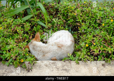 Stray dog sleeping cold in grass meadow - Stock Photo