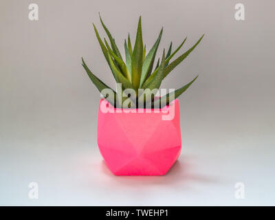 Green succulent plant in fresh pink geometric concrete planter isolated on white background. Colorful painted concrete pots for home decoration. - Stock Photo