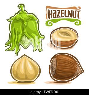 Vector set of Hazelnut Nuts - Stock Photo