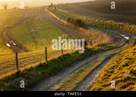 Early spring on the South Downs in West Sussex. - Stock Photo