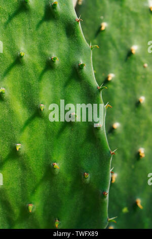 Close up. Cactus. Succulents and cacti - Stock Photo