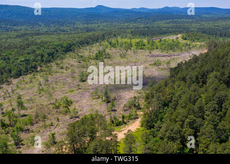 Williams Junction, Arkansas - A logging clear-cut in Ouachita National Forest. - Stock Photo