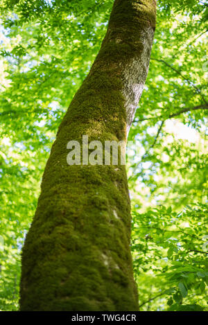 Tree trunk covered with moss - Stock Photo