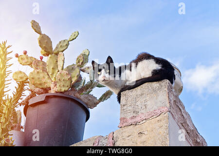 Homeless cat hiding on fence near potted flowers against blue sky Stock Photo