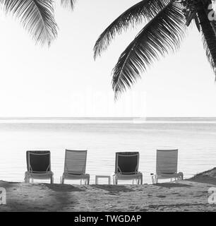 Beach chairs in sand with tropical palm trees as vintage background in stunning black and white - Stock Photo