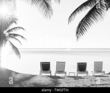 Sunset through palmtrees over a tropical beach with deckchairs in the sand in stunning black and white - Stock Photo