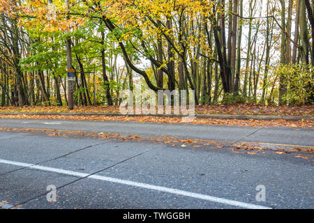empty asphalt road through forest in autumn in seattle