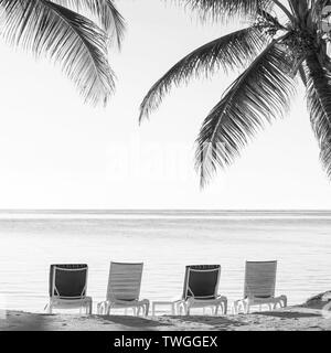 Palmtrees on tropical beach with deckchairs in the sand overlooking the water in stunning black and white - Stock Photo