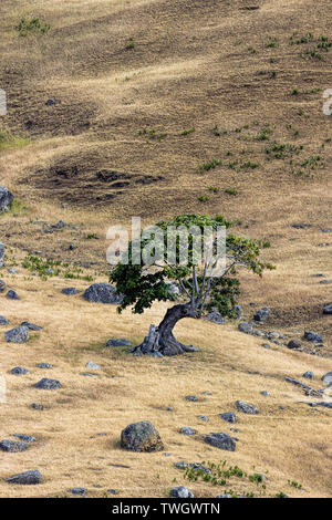 A lone tree on the banks of Spieden Island on the north end of San Juan Island in Washington. - Stock Photo