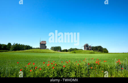Rural landscape with historical windmills behind wheet field in Spring with orange poppy flowers in front. Romantic Poland, panoramic image. - Stock Photo
