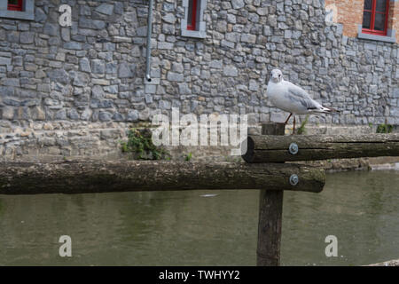 Seagull on a wooden bridge close-up - Stock Photo