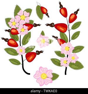 Set of dog rose. Vintage botanical hand drawn illustration of briar flowers, buds, berries and leaves - Stock Photo