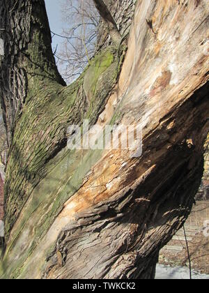 Close-up colorfull photo Traces of a pest on a tree bark - Stock Photo