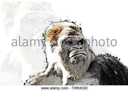 cb3ac2dde Outraged gorilla face locking for someone, colorful realistic hand-drawn  sketch style isolated vector