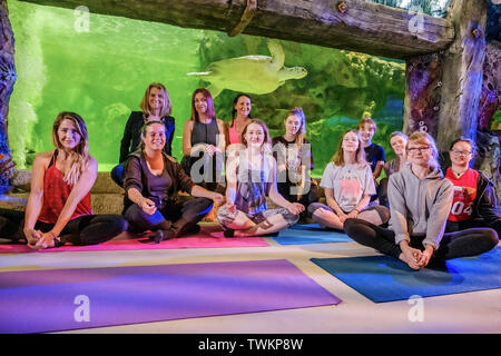 Brighton, Sussex, UK. 21st June, 2019. The Mayor of the City of Brighton & Hove Councillor Alex Phillips joins in a special yoga at the aquarium class on Friday 21 June 2019 at Brighton SEA LIFE, Brighton. Picture by Julie Edwards/Female Perspective. Credit: Female Perspective Ltd/Alamy Live News - Stock Photo