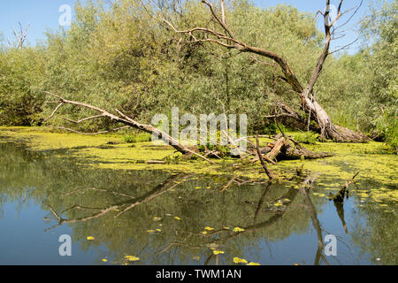 A typical view of the water and vegetation in the Danube delta near Tulcea, Romania - Stock Photo