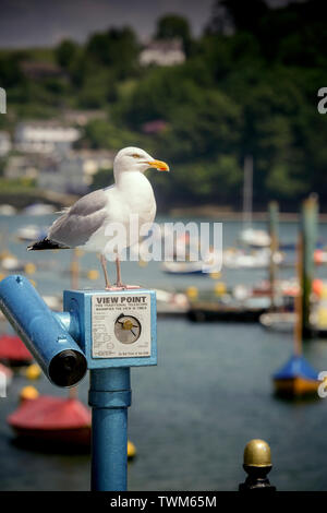 A seagull stands on the top of a viewing telescope in the port of Fowey, Cornwall, UK - Stock Photo