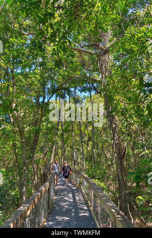 Visitors on the boardwalk in the Sea Acres Rainforest Centre, Port Macquarie, New South Wales, Australia - Stock Photo