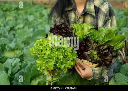 Young farmer is holding vegetable green oak, Hydroponic eco organic modern smart farm 4.0 technology - Stock Photo