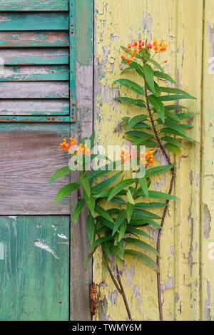 Chipped paint in New Orleans, Louisiana. - Stock Photo
