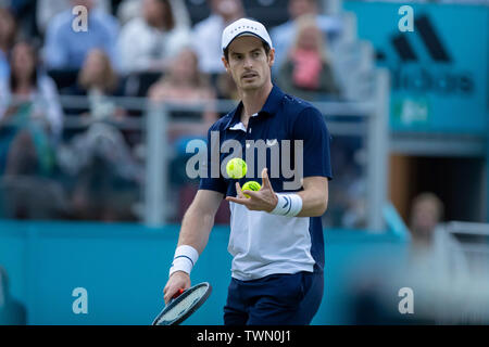 Queen Club, London, UK. 21st June, 2019. The ATP Fever-Tree Tennis Tournament; Andy Murray (GBR) prepares to serve to Daniel Evans (GBR) Credit: Action Plus Sports/Alamy Live News - Stock Photo