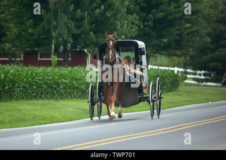 Family riding a horse-drawn buggy on a country road in Pennsylvania, USA - Stock Photo