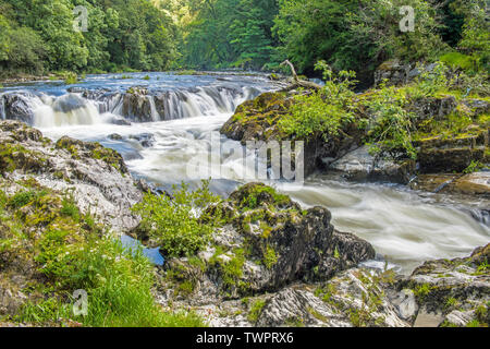 The Cenarth Falls on the River Teifi on the Carmarthenshire Cardiganshire Border in West Wales - Stock Photo