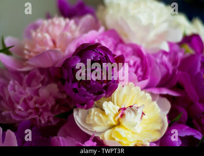Beautiful flowers, peonies. Elegant bouquet of a lot of peonies of pink color close up. - Stock Photo