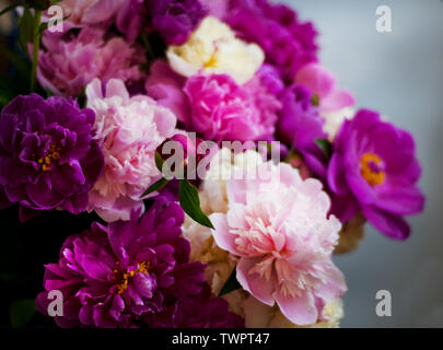 Beautiful flowers, peonies. Elegant bouquet of a lot of peonies of pink and red color close up. - Stock Photo
