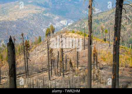Aftermath of forest fires, Yosemite National Park, CA, USA, by Bill Lea/Dembinsky Photo Assoc - Stock Photo