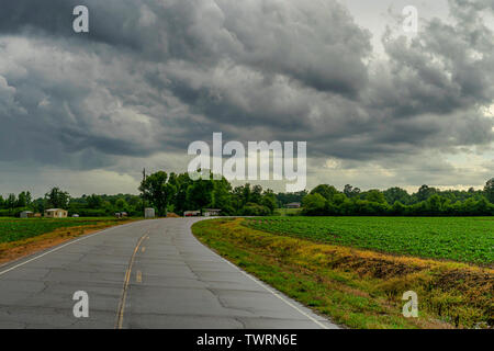 Storm clouds moving over a cotton field in Vernon, Alabama. - Stock Photo
