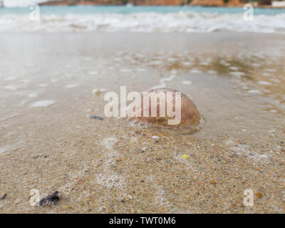 Dead jellyfish in sea foam. Selective focus. - Stock Photo