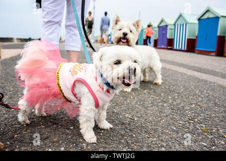 Brighton, UK. 23rd June, 2019. Sunday 23rd June 2019 Pooches on the Prom charity dog walk in aid of the Martlets Hospice, Brighton, East Sussex, UK photo Credit: Julia Claxton/Alamy Live News - Stock Photo
