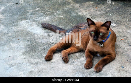 Dark brown cat on the cement floor - Stock Photo