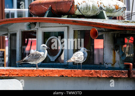 Portrait of two seagulls on an old rusty ship in Warnemuende harbour - Stock Photo
