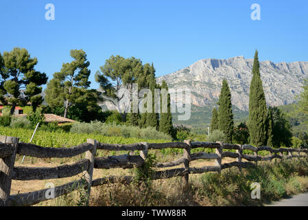 Cypress Trees and Vineyards in front of Mont Sainte-Victoire Mountain near Aix-en-Provence Provence France