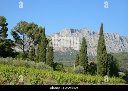 Cypress Trees and Vineyards in front of Mont Sainte-Victoire Mountain near Aix-en-Provence Provence France - Stock Photo