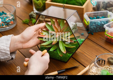 Woman transplanting plants in florarium. Home gardening concept - Stock Photo