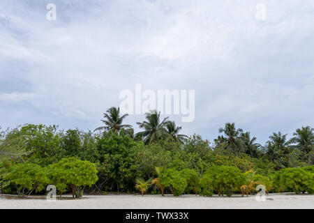 tropical beach in Maldives with few palm trees - Stock Photo